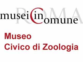 Museo Civico di Zoologia-www.museodizoologia.it